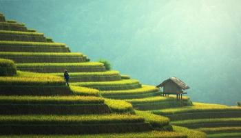 Blockchainplatform Ricex maakt rijsthandel transparant en eerlijk